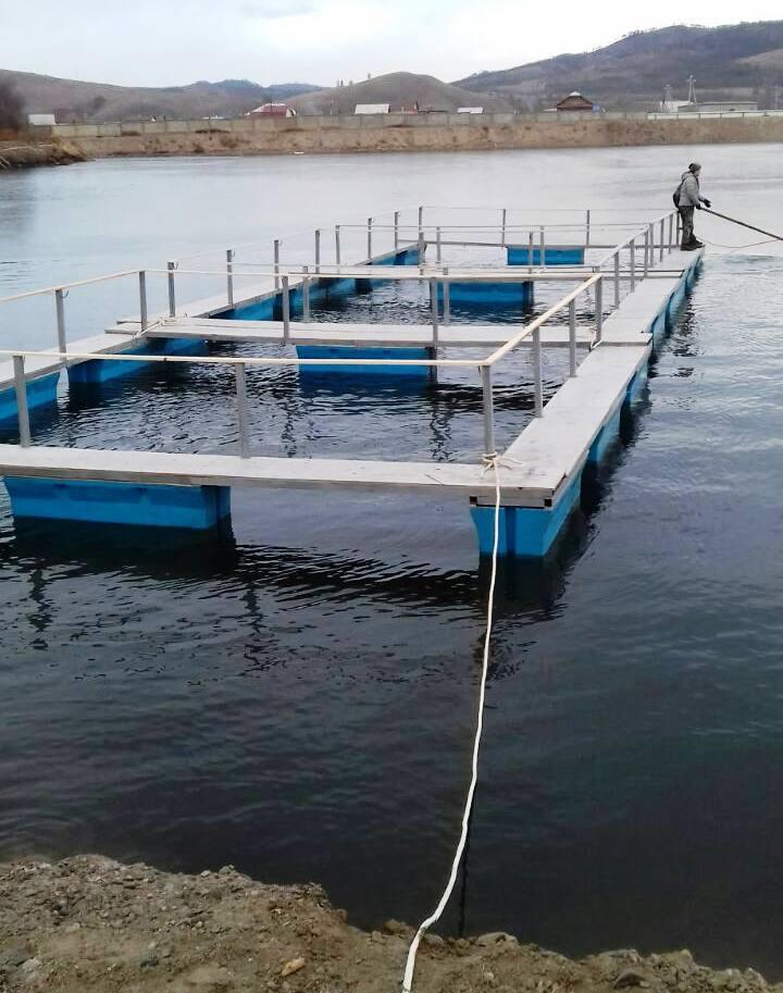 Выращивание рыбы в садках 491